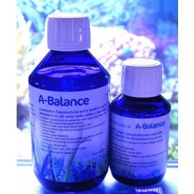 Korallenzucht Pohl`s A-Balance