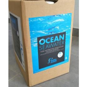 Fauna Marin Ocean Seawater