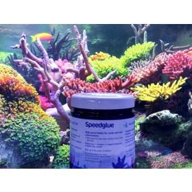 Korallenzucht Speedglue Korallenschnellkleber